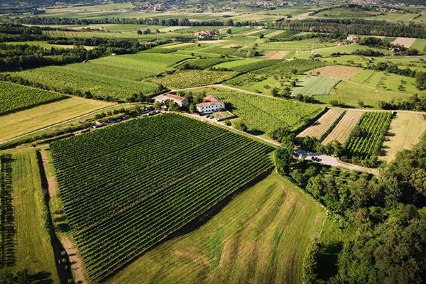 wine house ferjancic