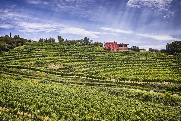 wine house gordia