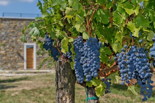 wine house rodica