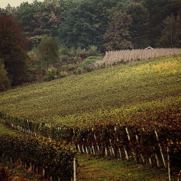 1istenic wines bewines
