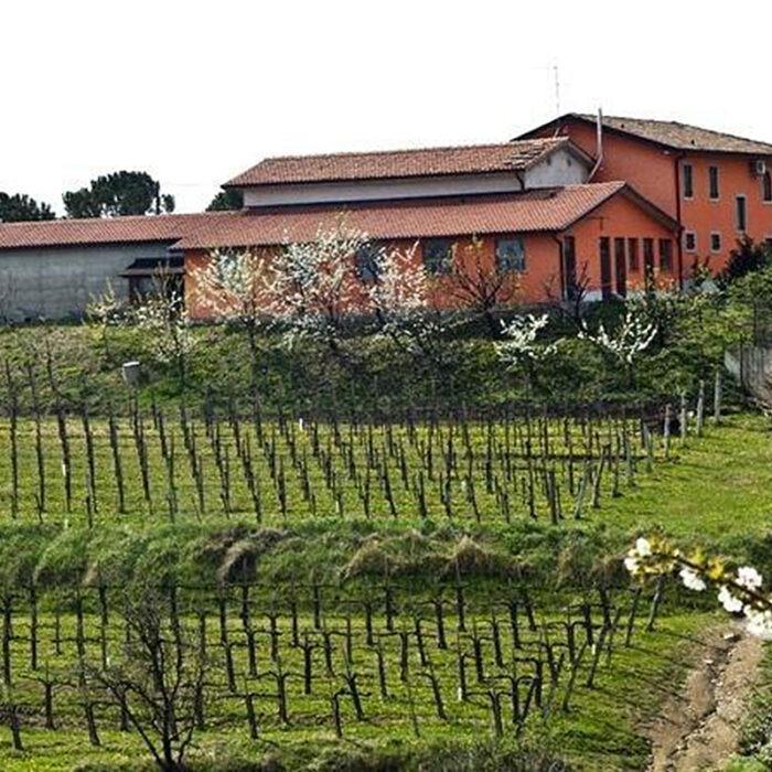 1zanut wines bewines