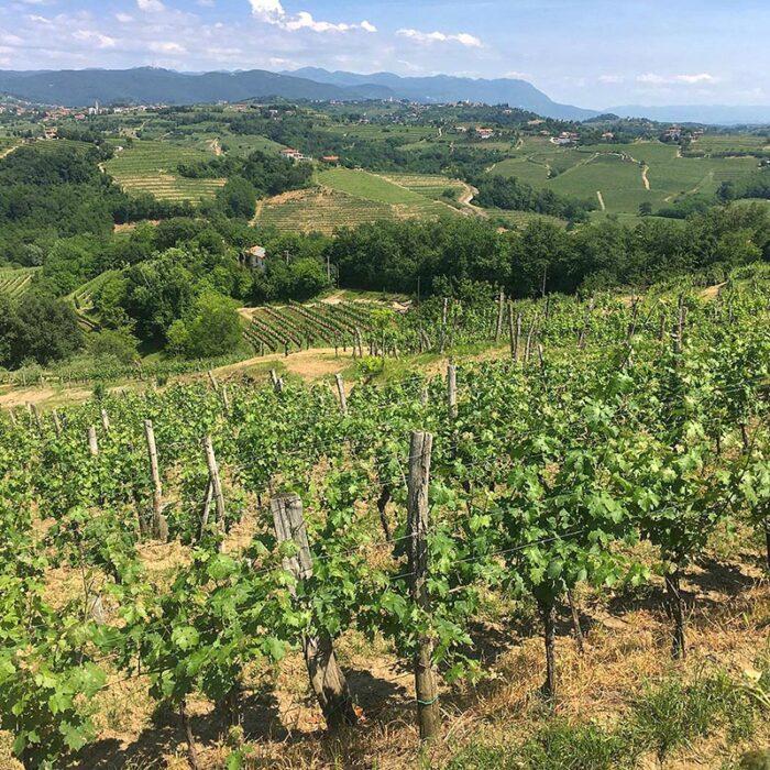 2kristancic wines bewines