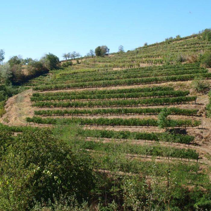 2povh wines bewine