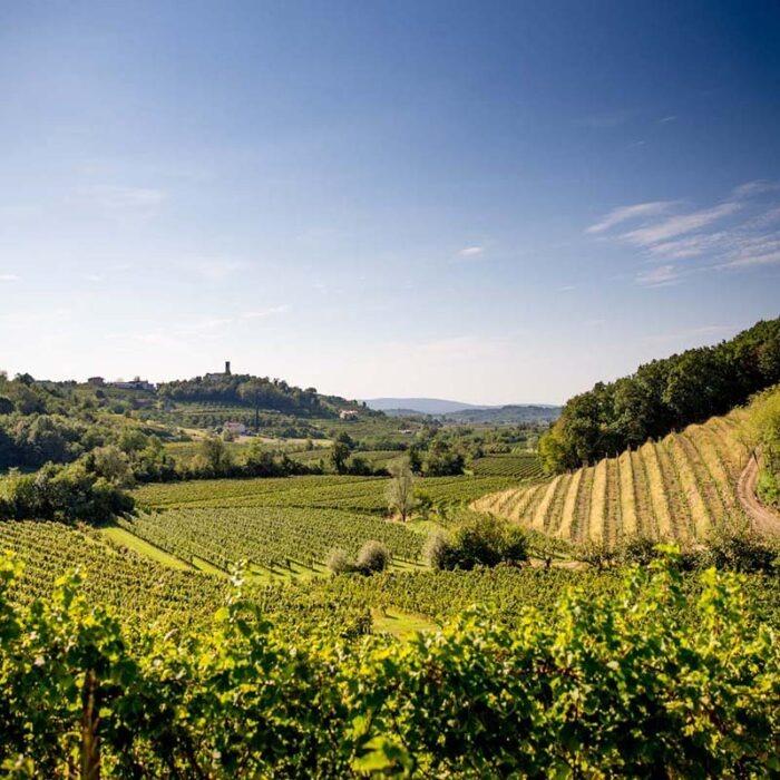 3princic wines bewines