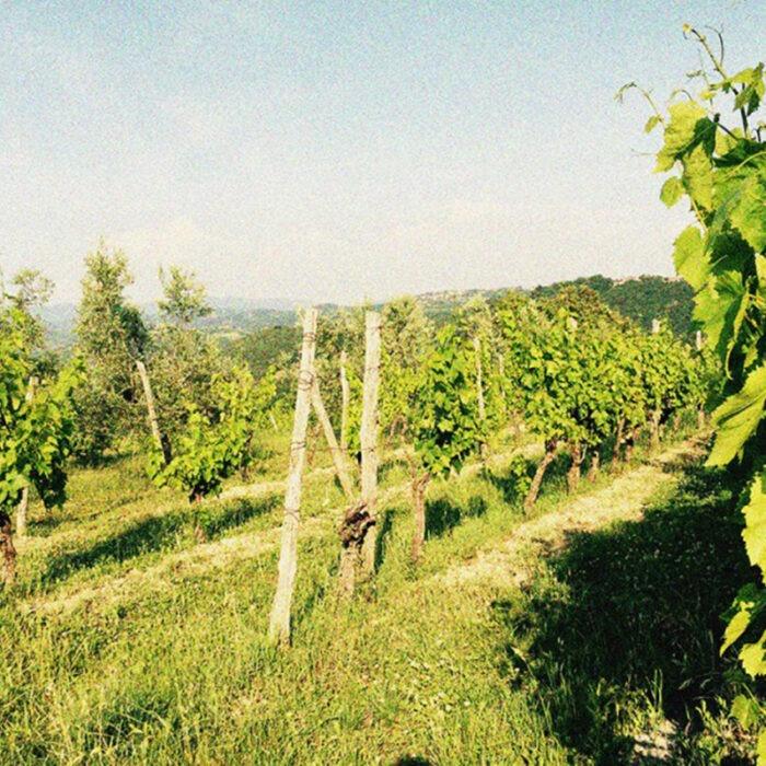 4butul wines bewines