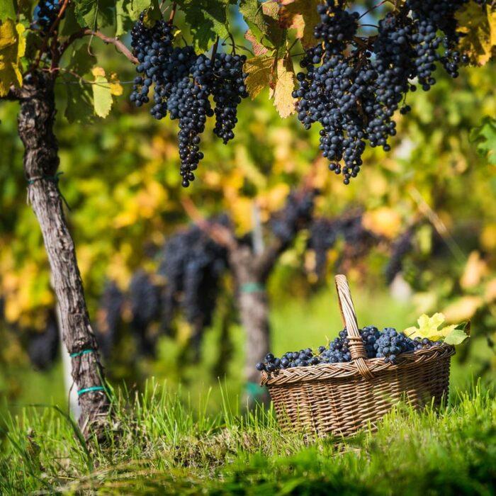 4ferdinand wines bewines