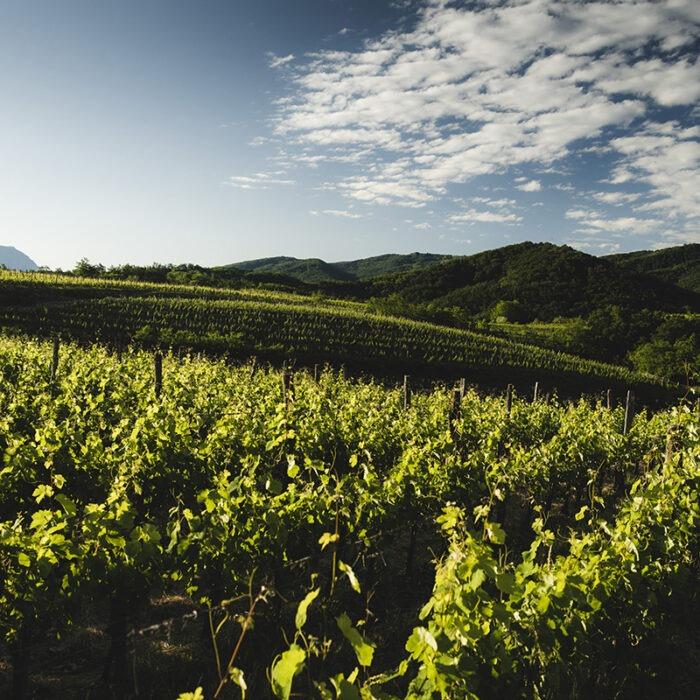 3stemberger wines bewines
