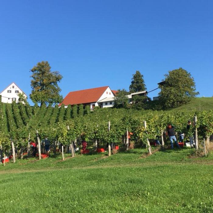 1hlade wines bewines