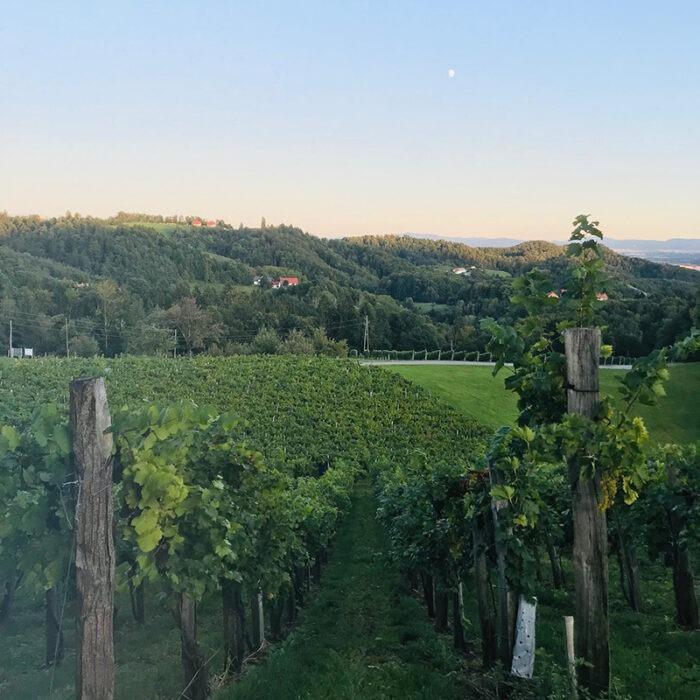 3hlade wines bewines