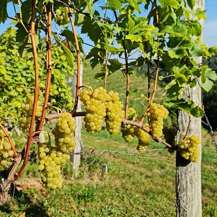 4hlade wines bewines